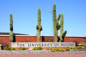 University of Arizona garden with three saguaros